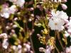 kwiatki-i-praktyki-1-of-28