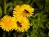 kwiatki-i-praktyki-6-of-28