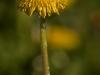kwiatki-i-praktyki-7-of-28