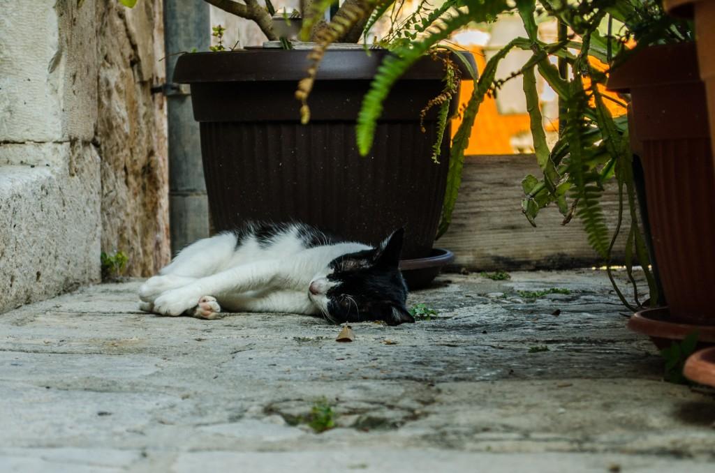 Dubrovnik_071