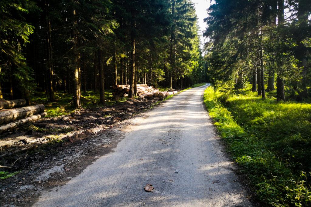 Malowniczy las ponad Vrbnem nad Pradedem