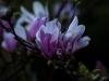 kwiatki-i-praktyki-1-of-1