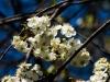 kwiatki-i-praktyki-12-of-28