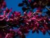kwiatki-i-praktyki-14-of-28