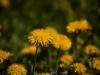 kwiatki-i-praktyki-3-of-28